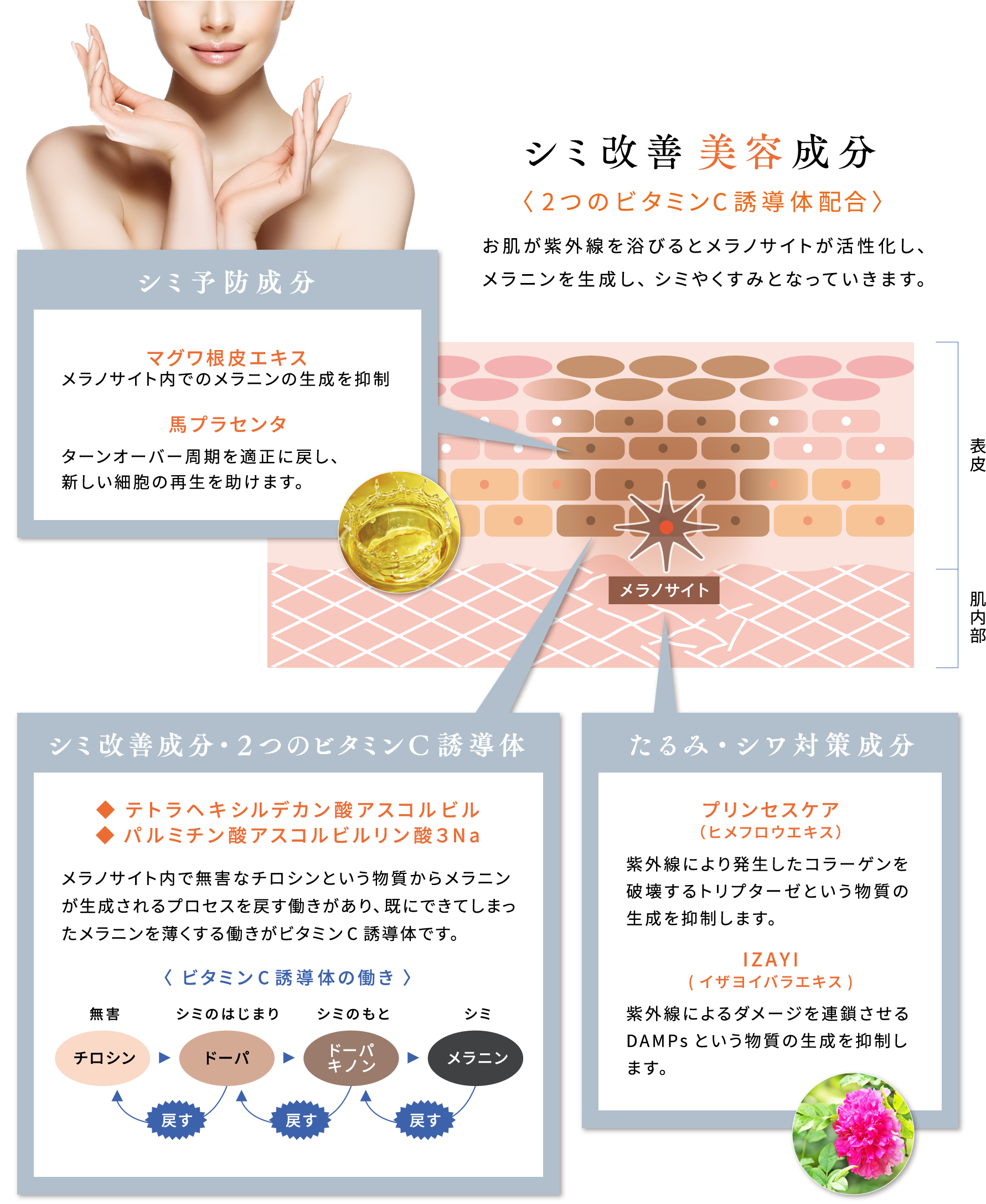 シミ改善美容成分〈2つのビタミンC誘導体配合〉お肌が紫外線を浴びるとメラノサイトが活性化し、メラニンを生成し、シミやくすみとなっていきます。